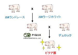 ②差替えピクア豚.png