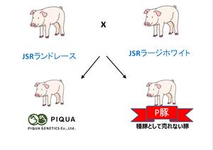 ③差替えP豚.png