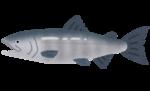 fish_sakana_sake.png