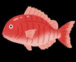 fish_sakana_tai.png