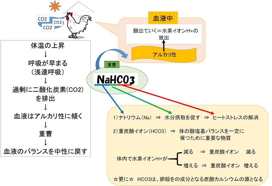 夏知らず図2.png